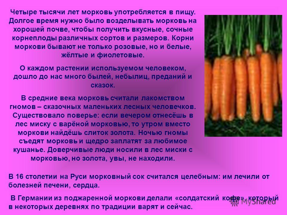 Фиолетовая морковь полезные свойства описание и особенности выращивания с фото