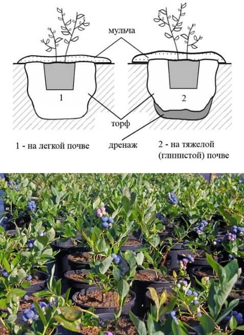 Грунт для хвойных и его состав, какая земля нужна растениям – готовим правильный субстрат.