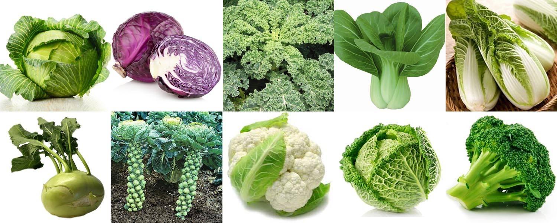 7 разновидностей культурной капусты