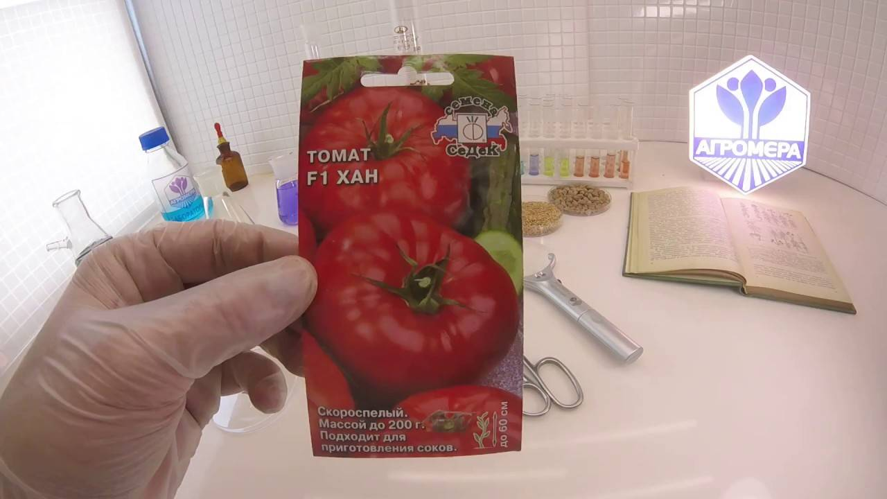 """Томат """"джина"""": характеристика и описание сорта, уникальные фото помидоров, выращивание, урожайность и борьба с вредителями русский фермер"""