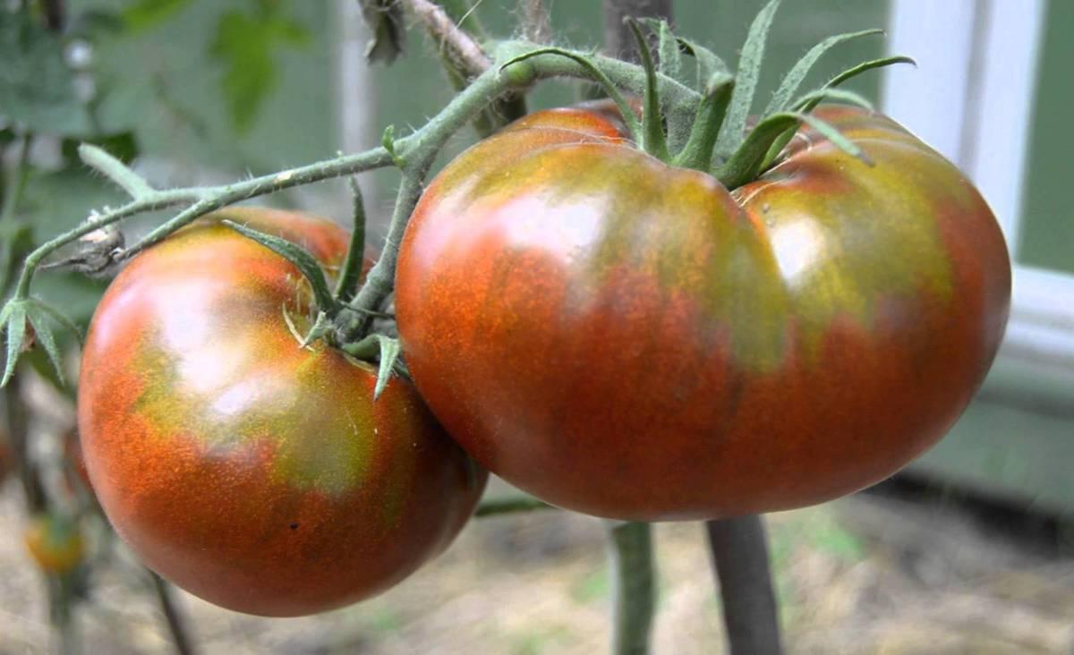 Черные помидоры - описание лучших сортов для открытого грунта и теплицы