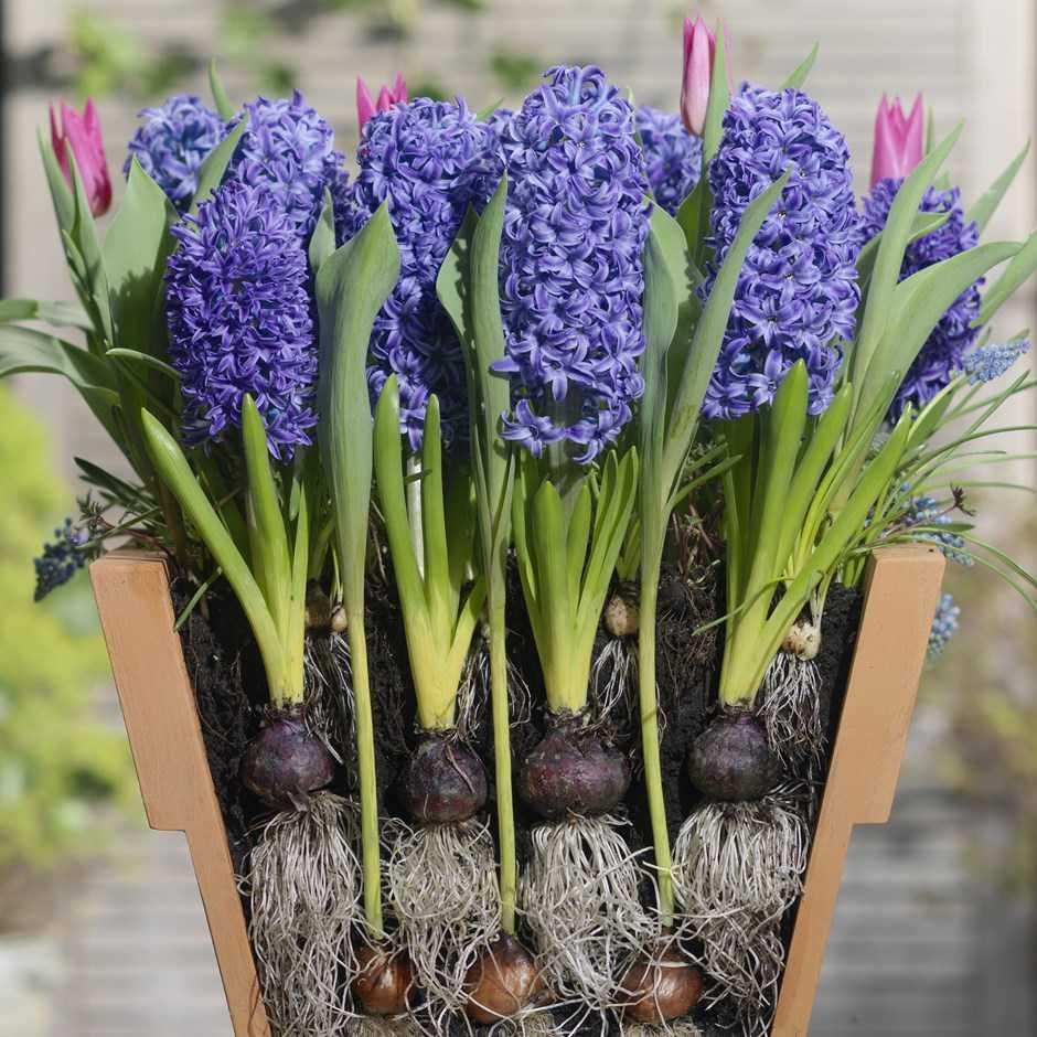 Где посадить весенние луковичные? 5 правильных решений. фото — ботаничка.ru