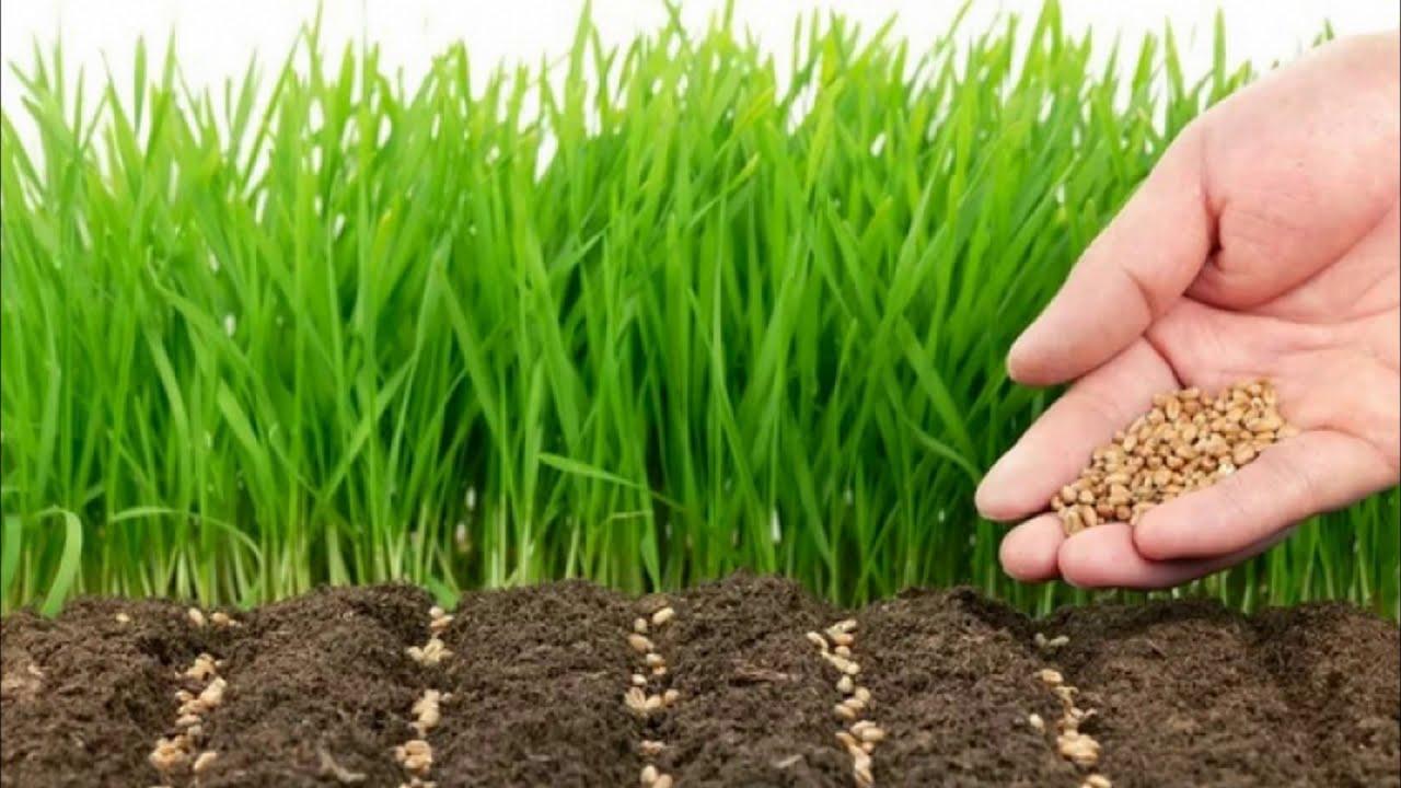 Какой рулонный газон лучше выбрать для дачи: узнайте важные нюансы выбора, прежде чем купить! |