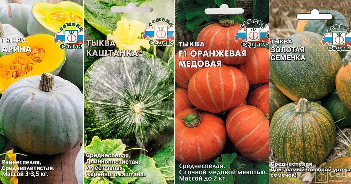 Кустовые сорта тыквы с описанием и фото