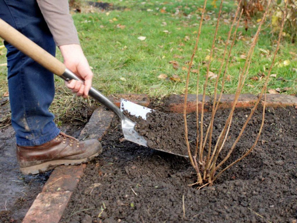 Нюансы осенней подкормки плодовых деревьев и кустарников