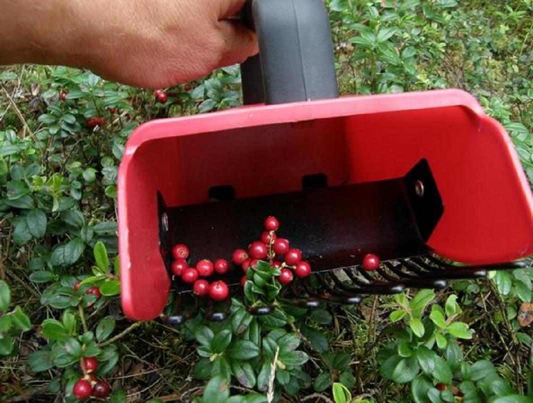 Комбайн для сбора ягод своими руками: чертежи, как сделать из пластиковой бутылки, канистры, отзывы