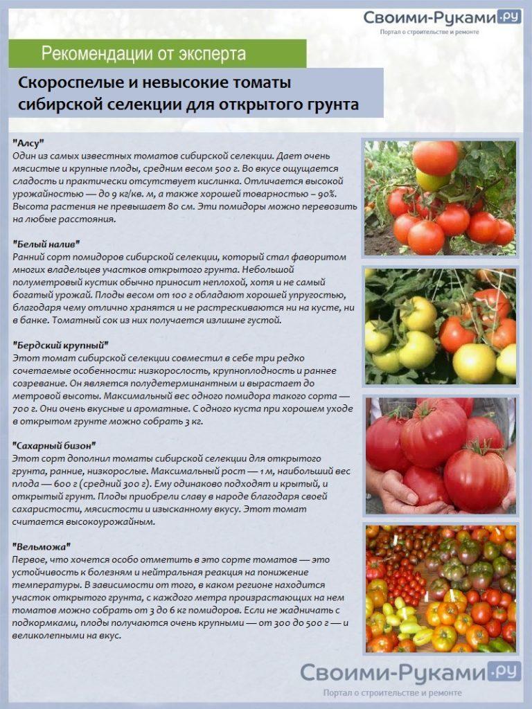 Описание томата Раджа, характеристика плодов и отзывы садоводов