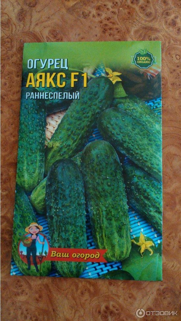 Огурец аякс f1: описание и характеристики сорта, рекомендации по посадке и уходу, возможные трудности при выращивании