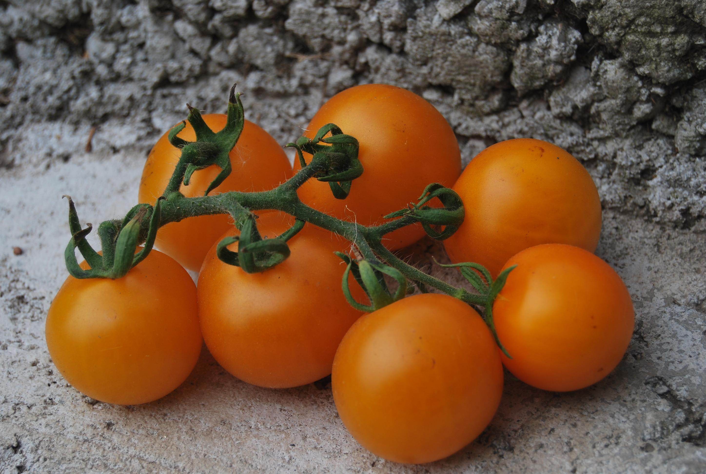 Томат линда f1 - характеристики сорта, особенности выращивания, сроки созревания помидор и способы получения семян