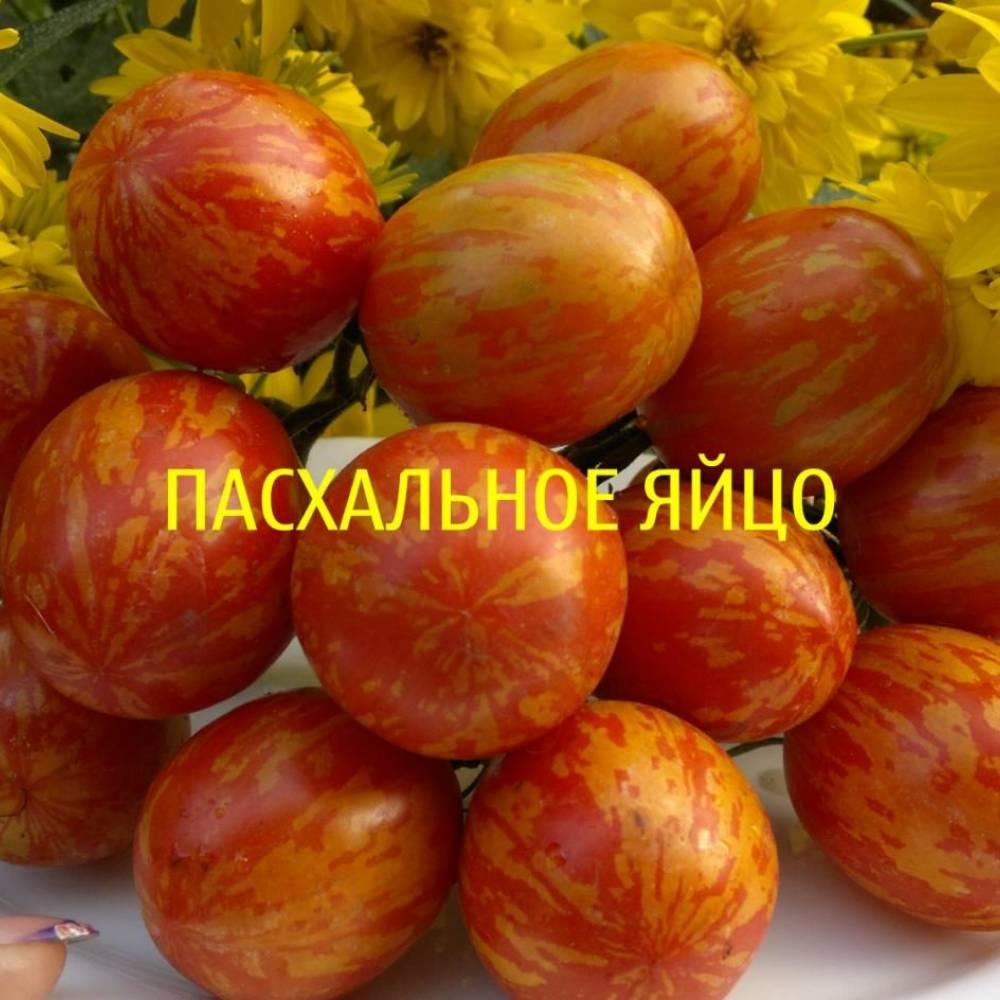Томат пасхальное яйцо: описание сорта, характеристика, отзывы об урожайности, фото - все о помидорках