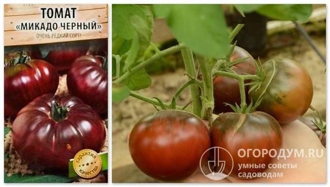 Томаты для кировской области теплица: лучшие сорта с фото