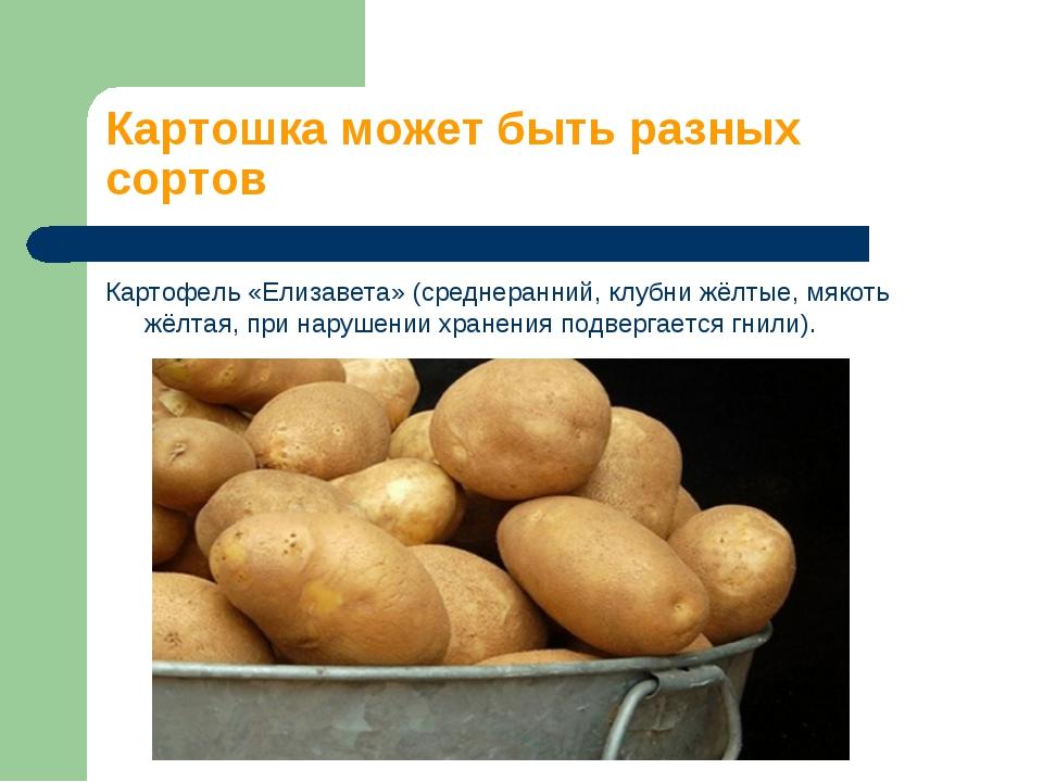 Картофель елизавета: характеристика и описание сорта, фото, отзывы
