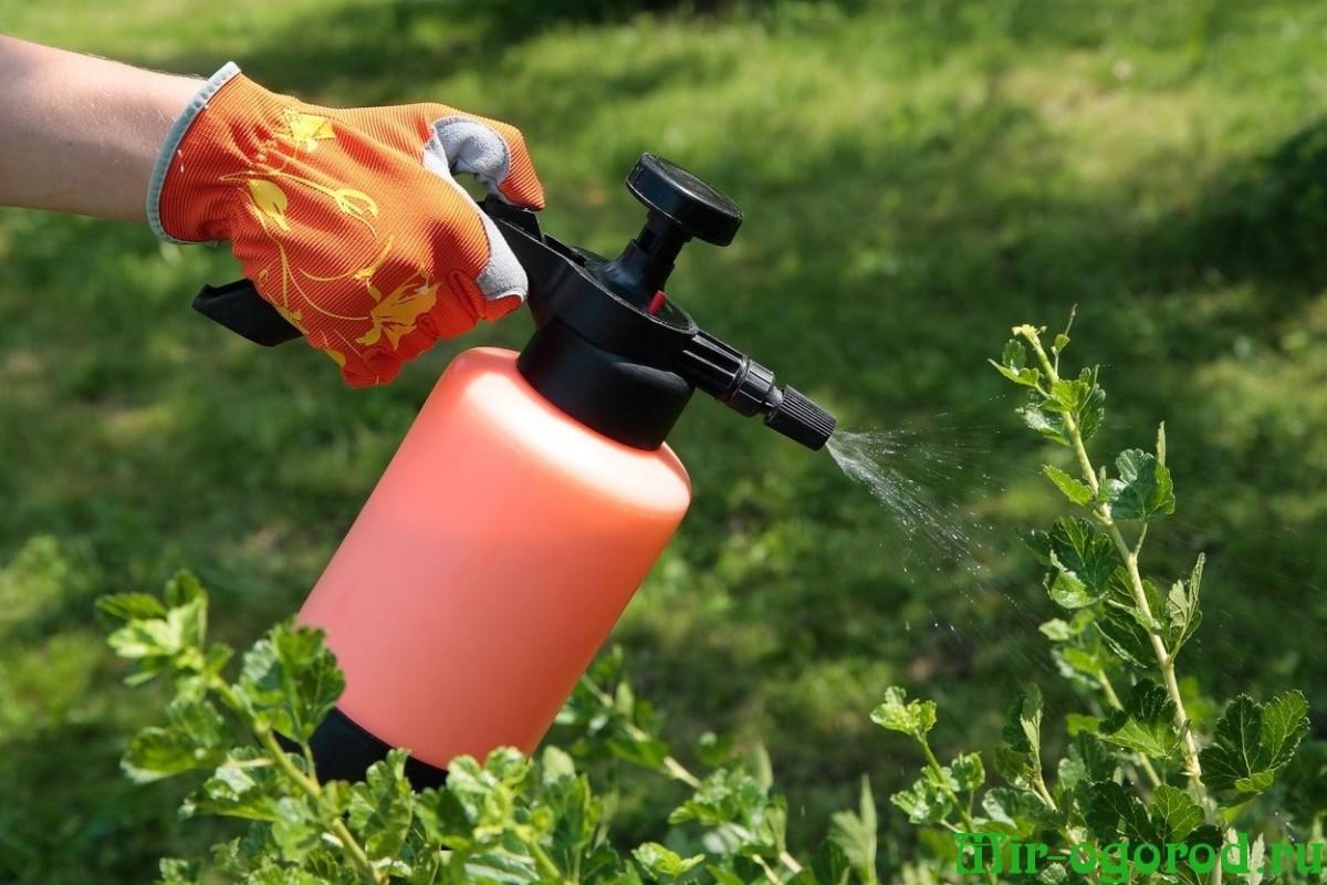 На моркови тля, как бороться в домашних условиях - agroflora.ru
