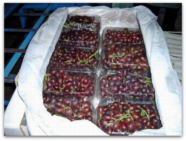 Как хранить виноград в домашних условиях на зиму: условия и сроки, способы