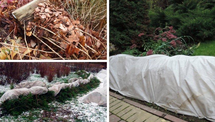 Уход за флоксами осенью и подготовка к зиме: обрезка и укрытие