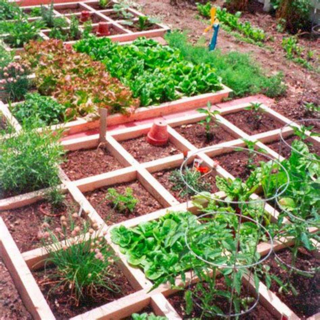 Декоративный огород как элемент ландшафтного дизайна участка