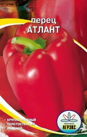 """Перец """"атлант"""": характеристика и описание сорта, отзывы, урожайность, фото на кусте"""