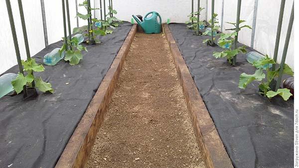 Как приготовить почву для огурцов в теплице весной: какая земля нужна, подготовка грунта