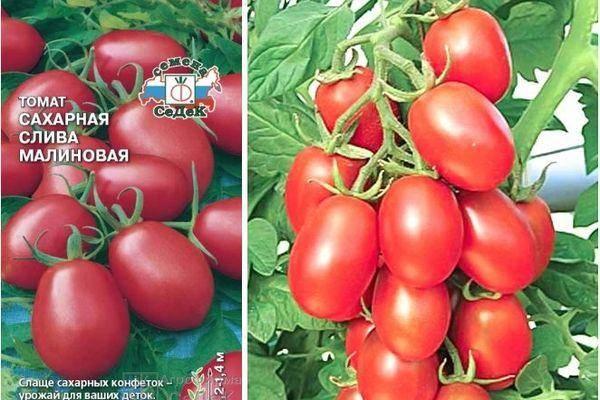 Томат сахарная слива: описание сорта, фото, отзывы, урожайность