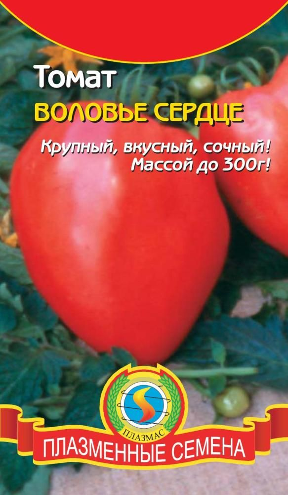«воловье сердце» — томат для позднего салата