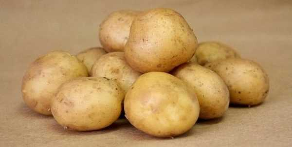 Картофель лабелла: описание сорта, выращивание и урожайность с фото