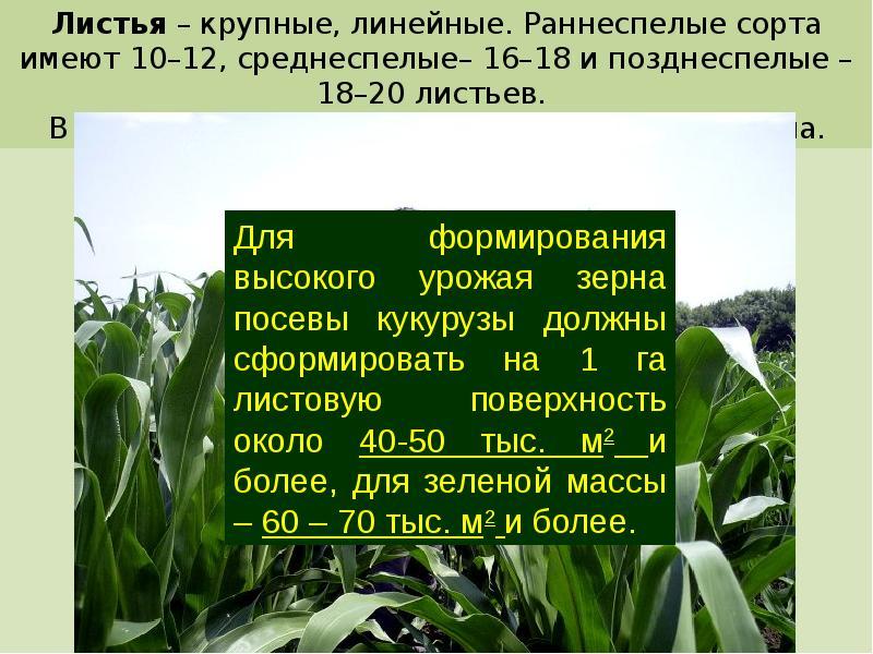 Глубина посева, норма высева, густота стояния растений и ширина междурядий | agromage.com