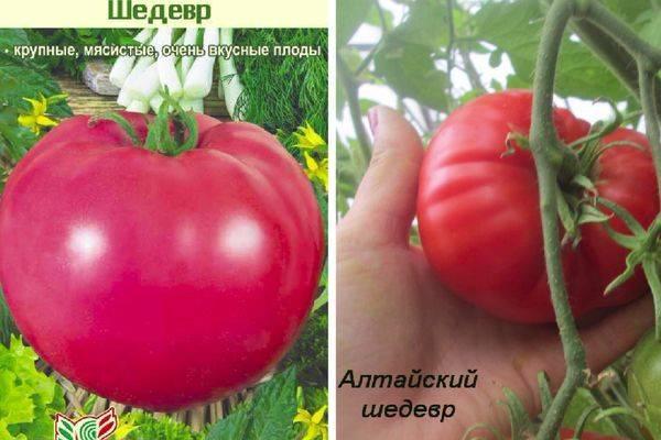 Описание томата отечественной селекции Шедевр и рекомендации по выращиванию