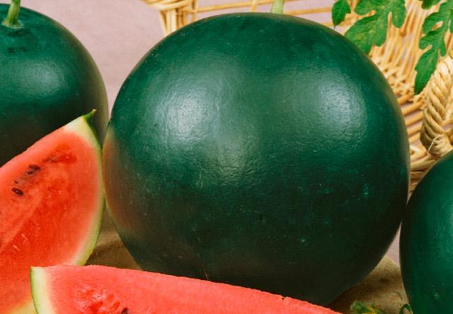 Лучшие сорта арбузов для средней полосы