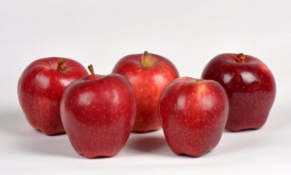 Описание и характеристики яблок сорта ред чиф, выращивание и уход