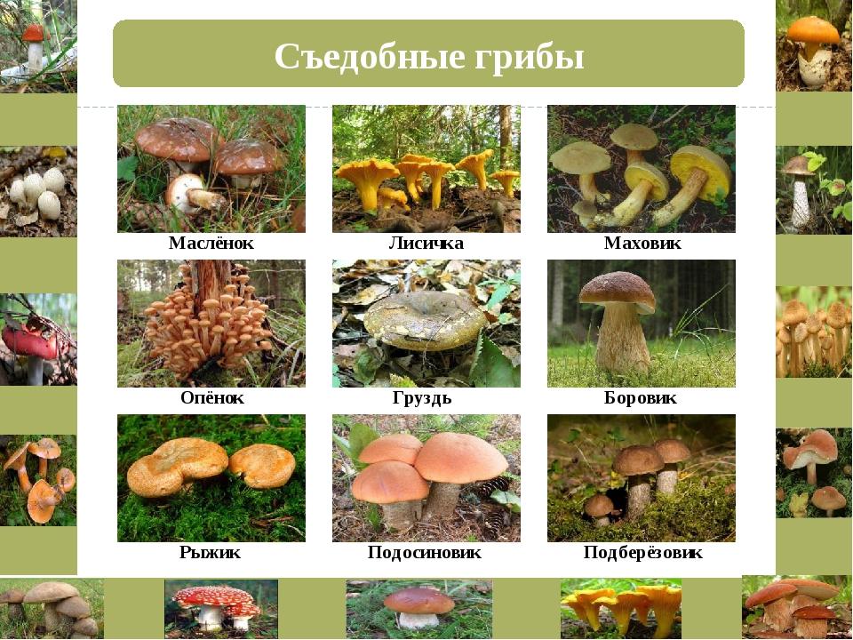 Грибные места в волгоградской области 2020: отзывы на форуме, фото на карте