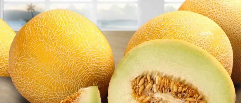 Дыня — секреты выращивания, хранения и потребления