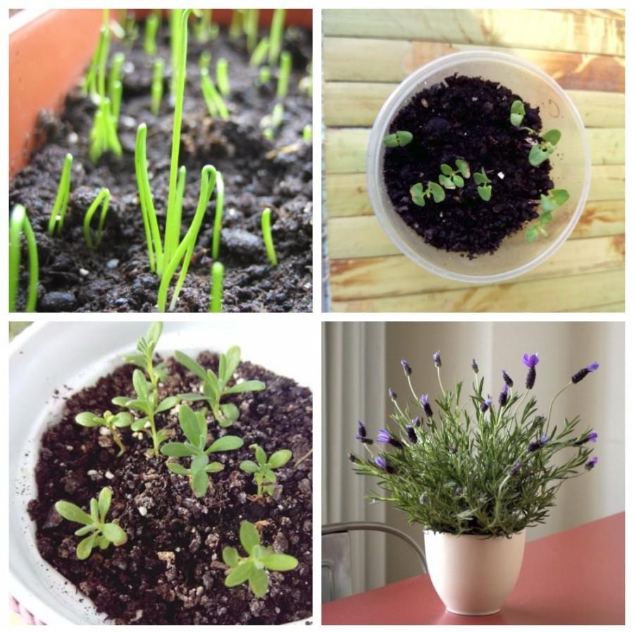 Выращивание эстрагона в домашних условиях из семян, черенками, делением куста: как посадить тархун на подоконнике, как ухаживать за ним? русский фермер