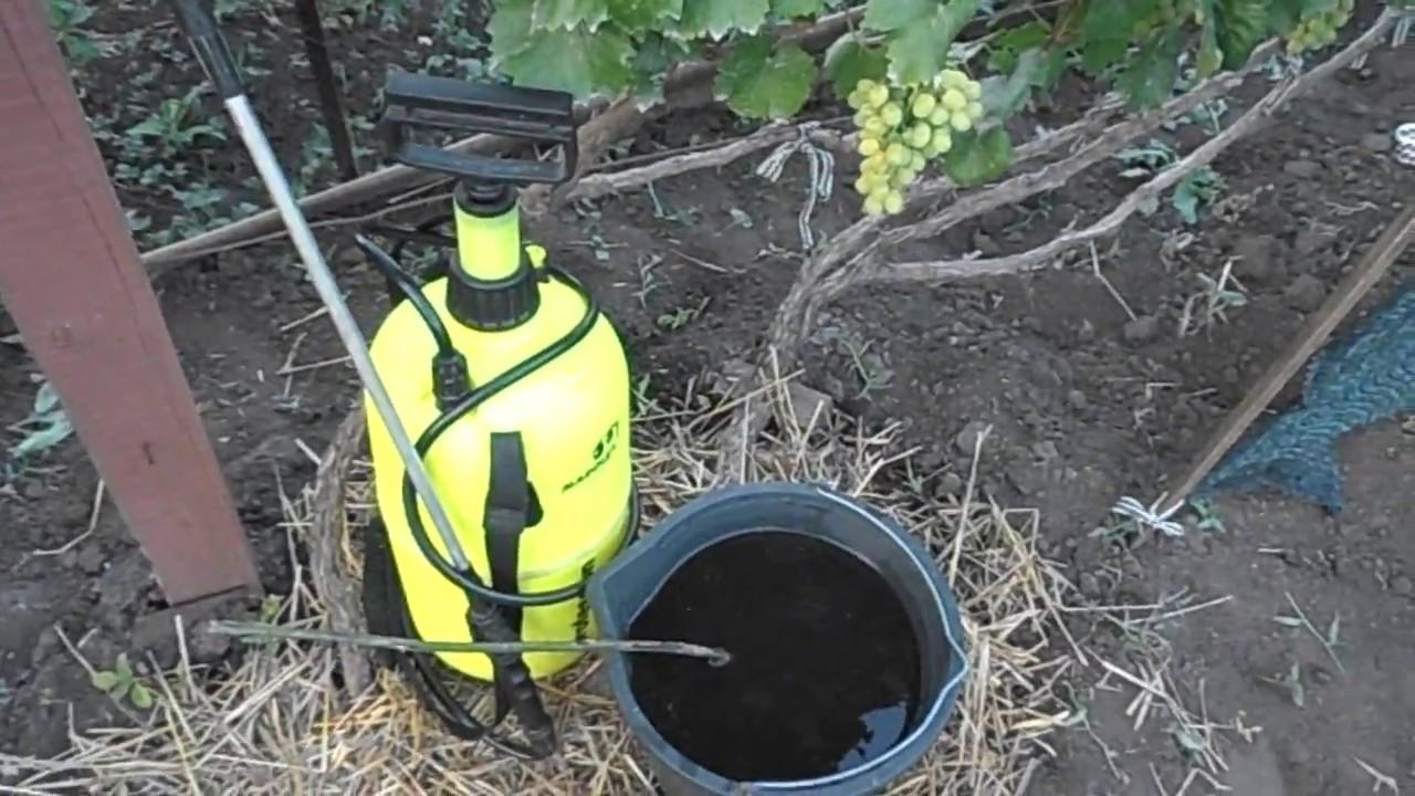 Как поливать виноград весной и летом. полив винограда летом — как это делать правильно