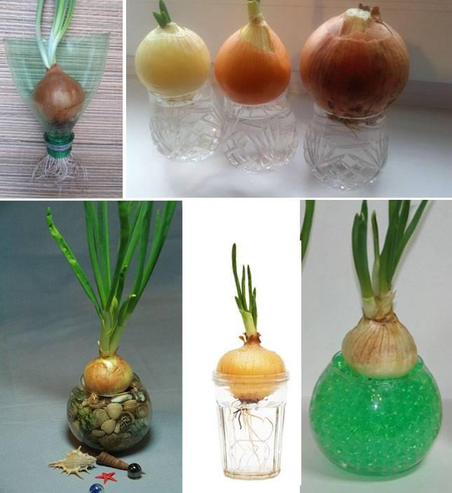 Как вырастить лук крупным - огород природное земледелие