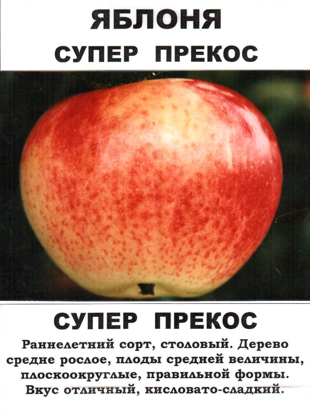 Яблоня осеннее полосатое: описание, фото, отзывы