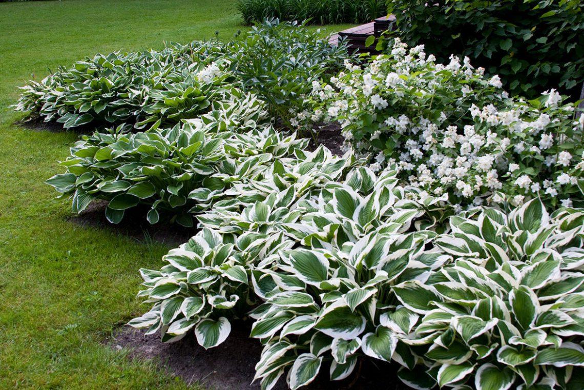 Луковичные цветы для сада (40 фото): названия многолетников. осенняя посадка растений на клумбе. мелколуковичные весенние и другие виды