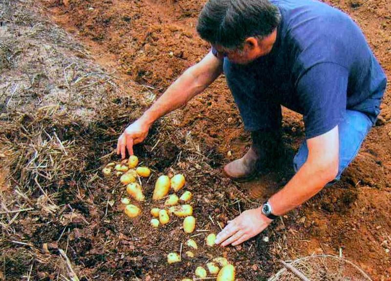 Мульчирование почвы скошенной травой: нюансы подготовки мульчи и ее применения для разных культур