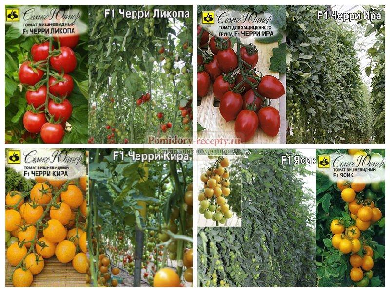 Лучшие черные сорта помидоров для теплицы и открытого грунта с фото и описанием