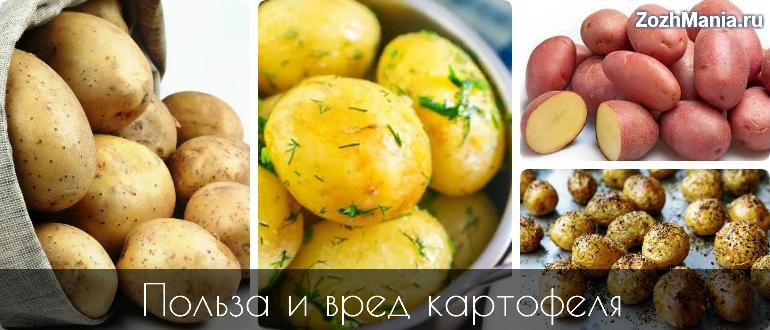 Картофель. польза и вред - портал обучения и саморазвития
