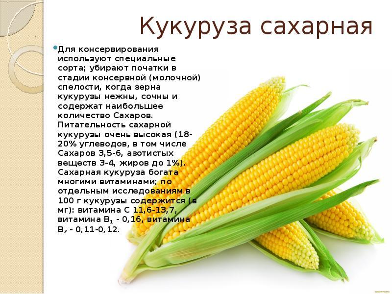 Как называется плод кукурузы - ogorod.guru