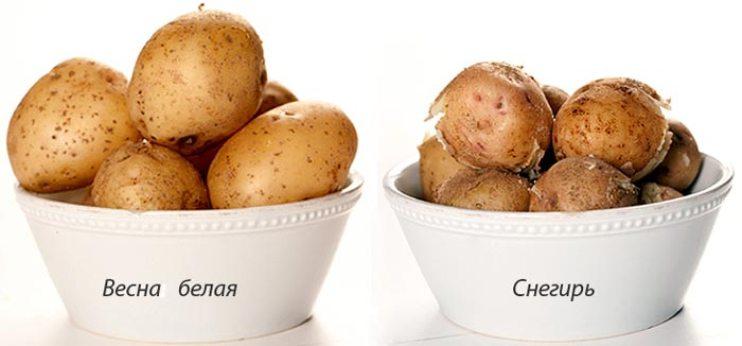 Картофель снегирь характеристика сорта отзывы вкусовые качества