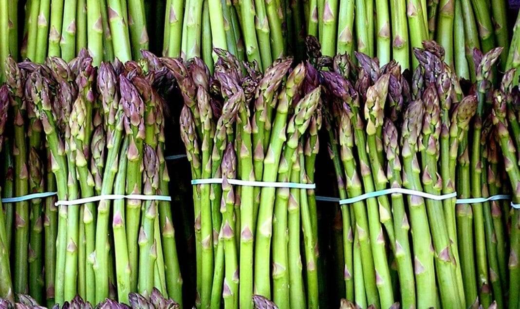 Спаржа: что это, как растет, как приготовить, польза и вред, калорийность, виды и состав