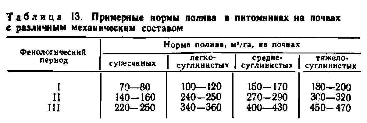 Когда перестают поливать лук | самоделки на все случаи жизни - notperfect.ru