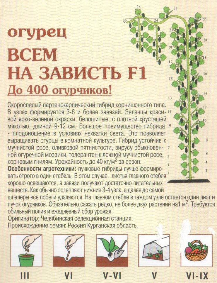 Чудо-дерево: многосортные прививки на supersadovnik.ru