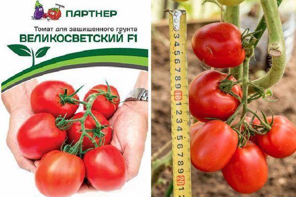 Описание томата Великосветский, характеристики и выращивание