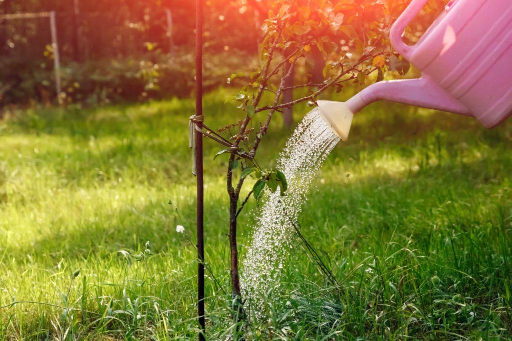 Подкормите эти деревья и кустарники осенью - иначе лишитесь урожая