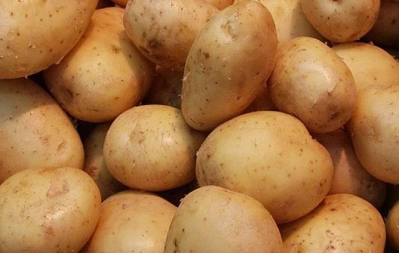 Сорт картофеля джелли: характеристика, описание с фото, отзывы