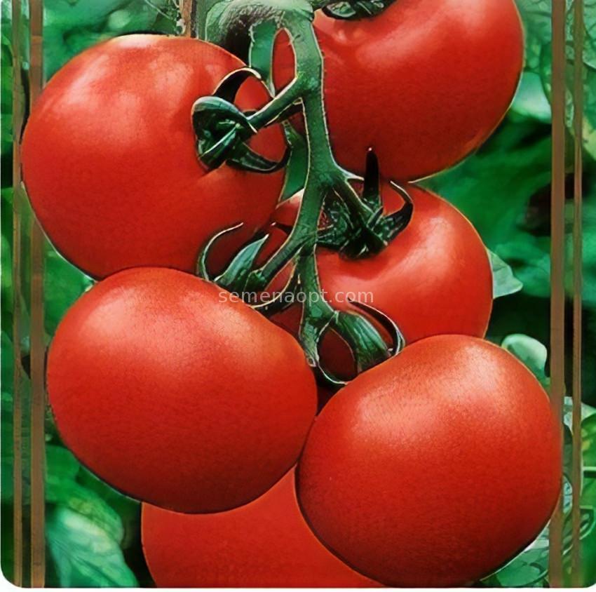 Томат фенда f1: отзывы, фото, урожайность, характеристика и описание сорта