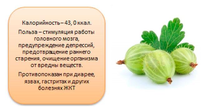 Крыжовник: польза и вред для здоровья человека, рецепты