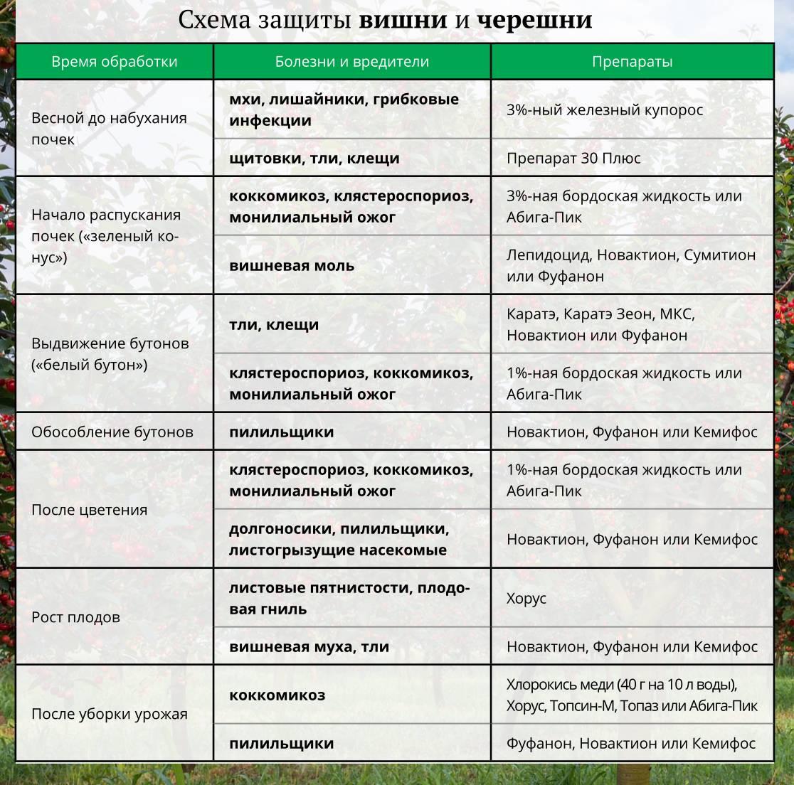 Опрыскивание плодовых деревьев весной, летом и осенью